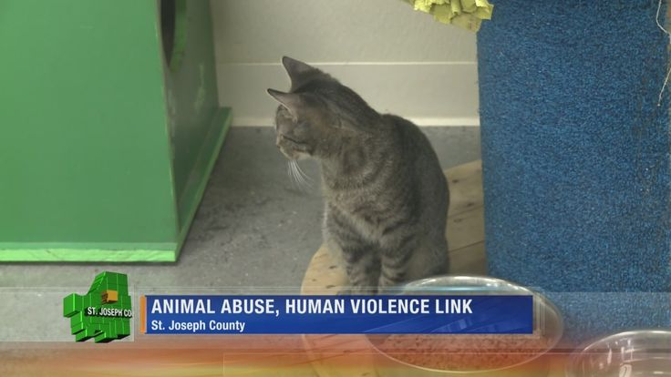 how is animal abuse linked to human abuse essay Annotated bibliography: cruelty to animals and violence to humans (1998-2013) and the implication of these empirical findings for programs to enhance human and animal welfare concepts like animal abuse and animal cruelty, it suggests that the link between animal abuse and.
