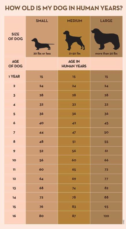 Want to know your dog's age in human years? While there's not a cut-and-dry method to calculate dog years, you can consult this general chart, provided by the American Kennel Club.