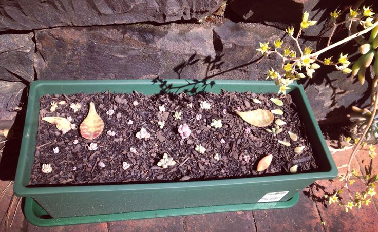 I got them a new pot and dirt to grow batter 💖