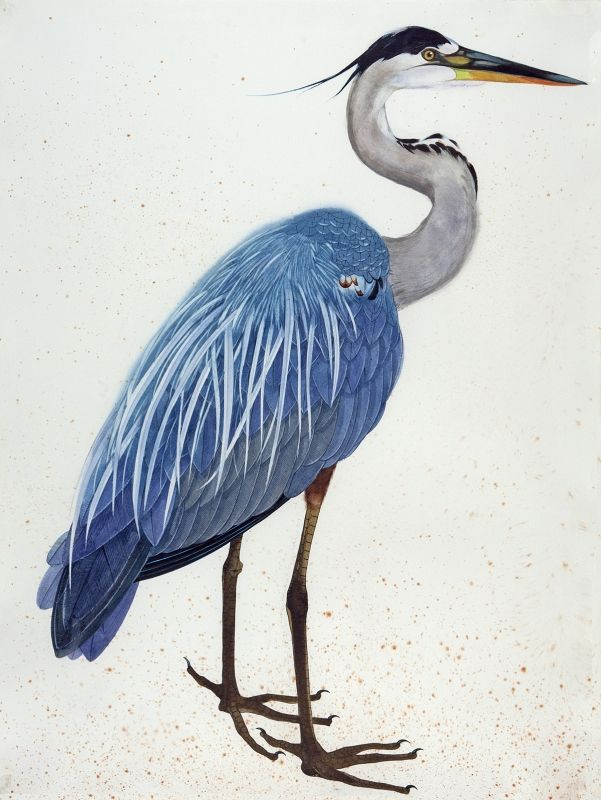 great blue heron (watercolor gouache and ink) by scott kelley - 2012