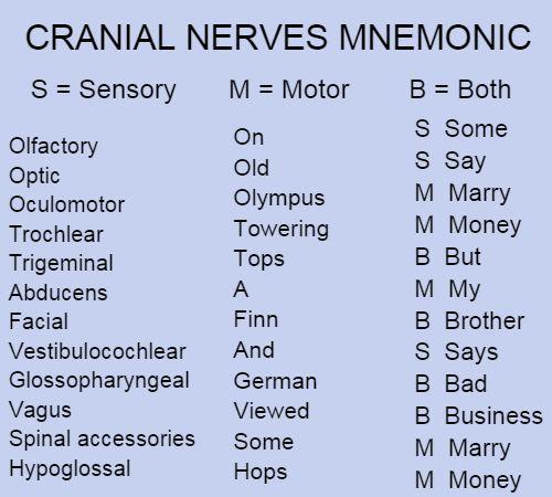Cranial Nerves Mnemonic 001