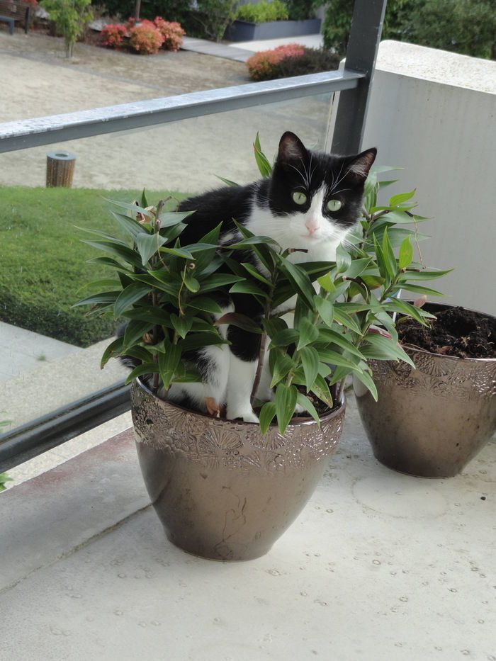 You mean you can still see me?  (Cat - European - Arwenn on www.yummypets.com)