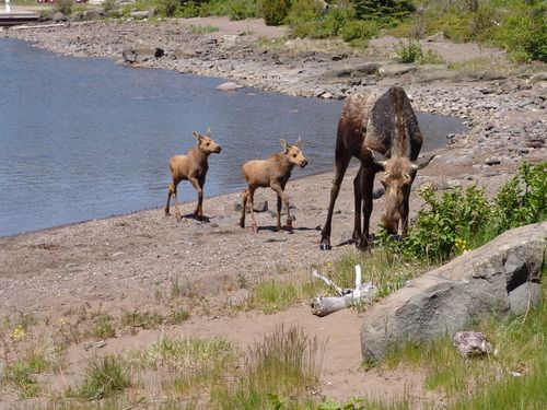Isle Royale National Park Isle Royale National Park Reviews - National parks in michigan