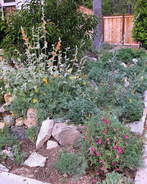 California Native Plant Landscape Design Examples: 43 Best Southern California Friendly Gardens Images On