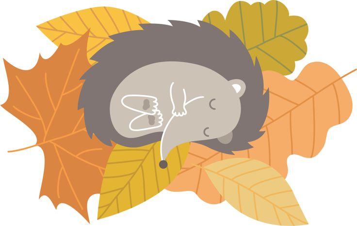 Śpiący jeżyk z pakietu edukacyjnego z okazji Dnia Jeża - http://www.ekokalendarz.pl/dzien-jeza-pakiet-edukacyjny/