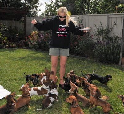Foxy Doxy Dachshund Rescue. Looks like heaven to me!!!  (A nest of wiener dogs!)