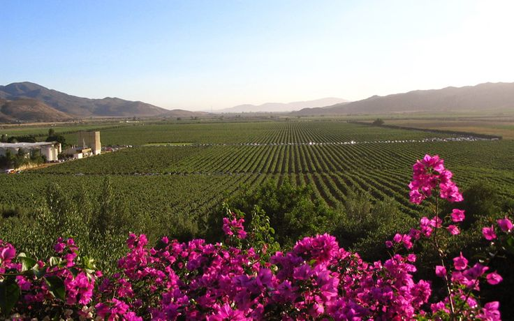 Winemaking in Mexico's Guadalupe Valley