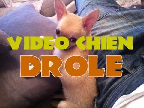 Betisier d'animaux, Vidéo marrant 2014 - droles de chien / Animals, funny