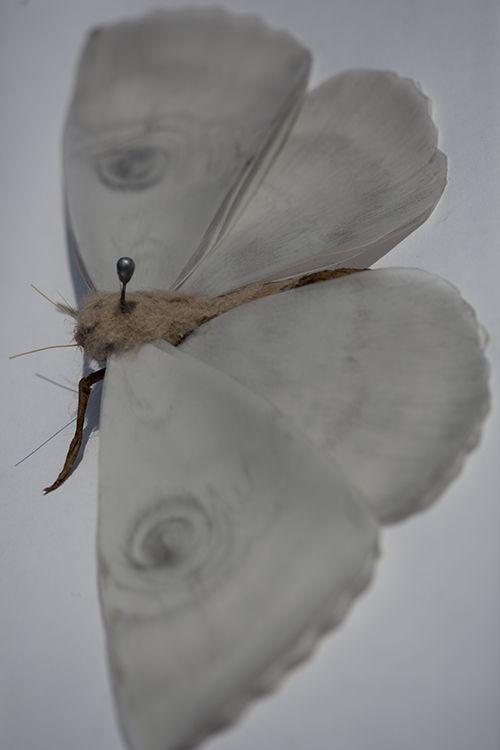 Pinned Moth