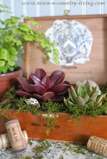 How to turn a simple cigar box into a planter for succulents