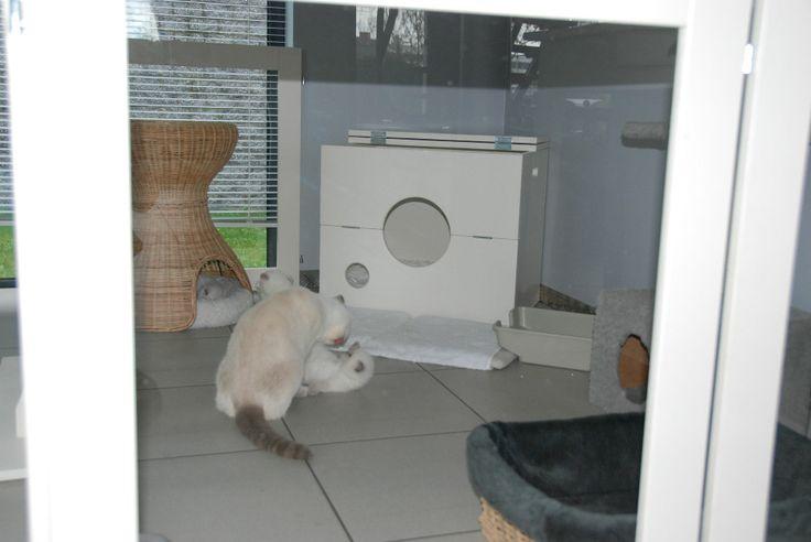 Cattery van Eyck. Kittenren 90 hoog en werpkist 60 breed. Kitten nursery