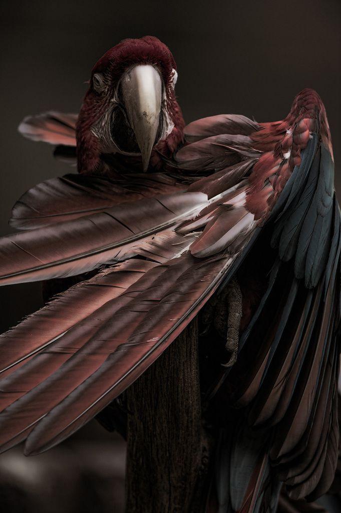 鳥の品位の画像(写真)LOVEREEZY コンゴウインコ