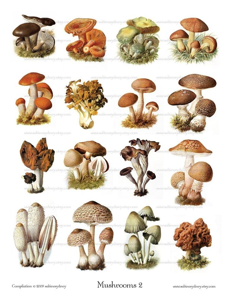 how to draw a mushroom - Google Search