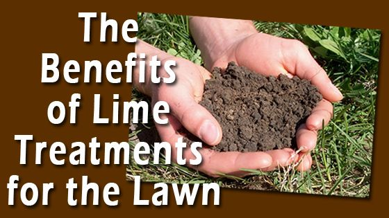 Lime for the Lawn: Quad Cities Lawn Treatments