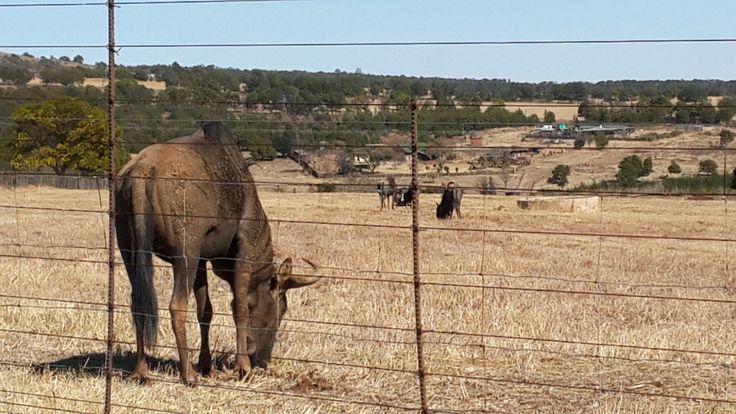 Neighboring Farm animals