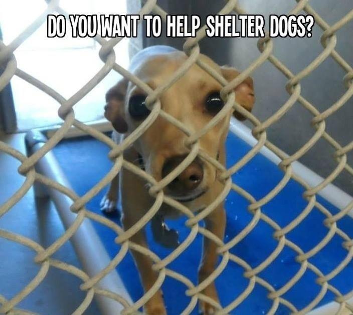 Adopt And Rescue Dog Adoption Dog Help Animal Advocacy
