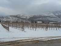 Rugged Abruzzo - home to the stunning, elegant whites of Cataldi Madonna - offer to follow..