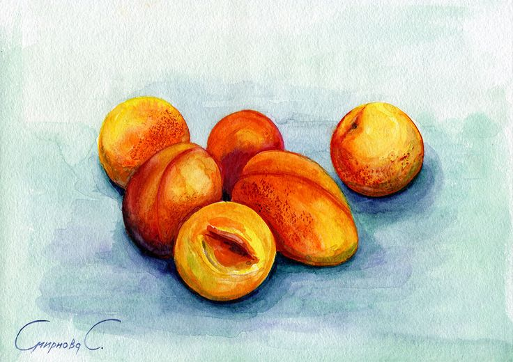 Apricots, Fruits, berries, Watercolor Original Painting from the Artist #Realism
