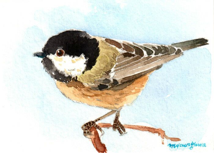 A chest-nut chickadee ACEO Limited Edition