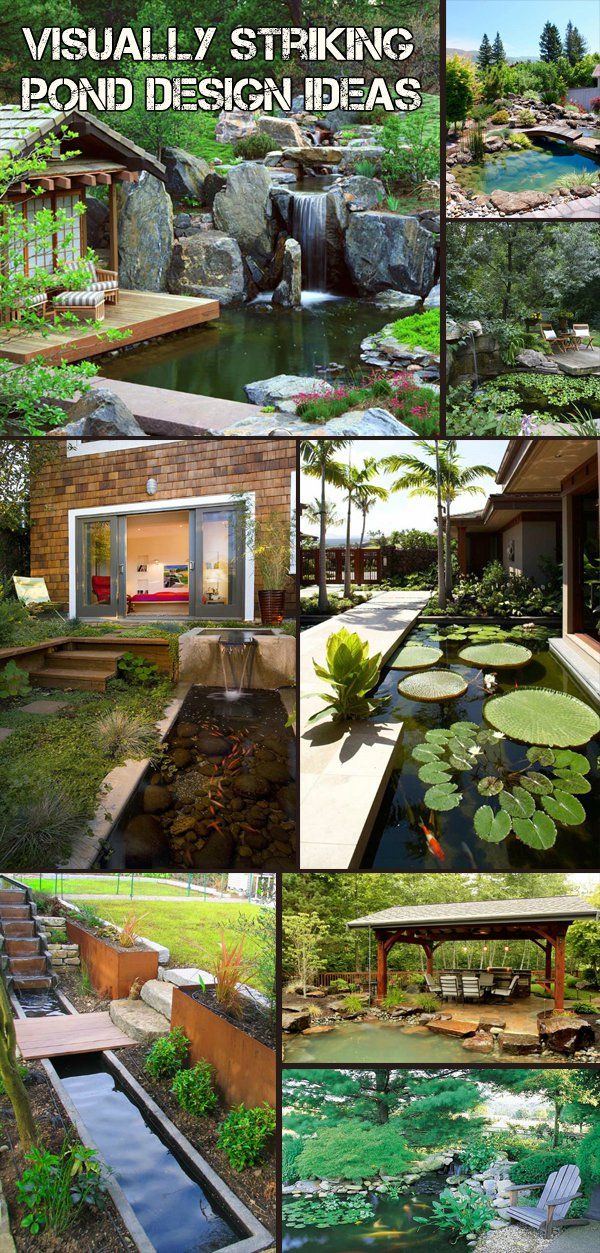 Visually striking pond design ideas for your backyard