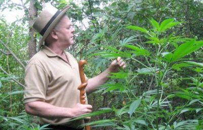 Madforlivet.com - Nyhedsbrev Juli 2014 Gratis E-bog om helbredelse med cannabis olie