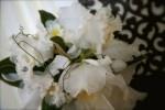 cattleya orchid bouquet, beautiflora