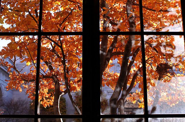 Freer Gallery of Art, view into courtyard in autumn | by Flickr user Mr. T in DC