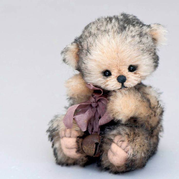 Valuable phrase Search sweet bear redirect the