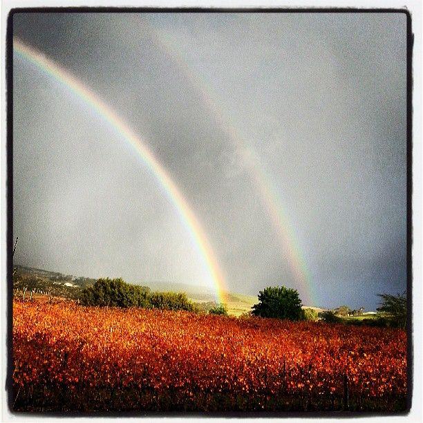 Double rainbow across the vineyards.