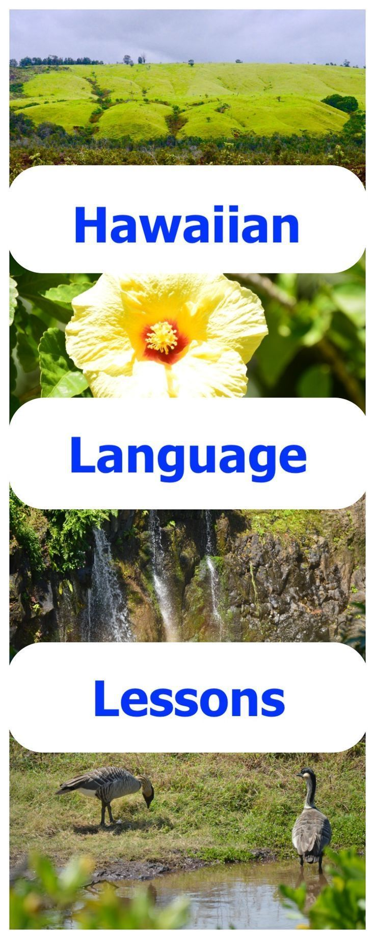 Pin On Homeschool Foreign Language Resources