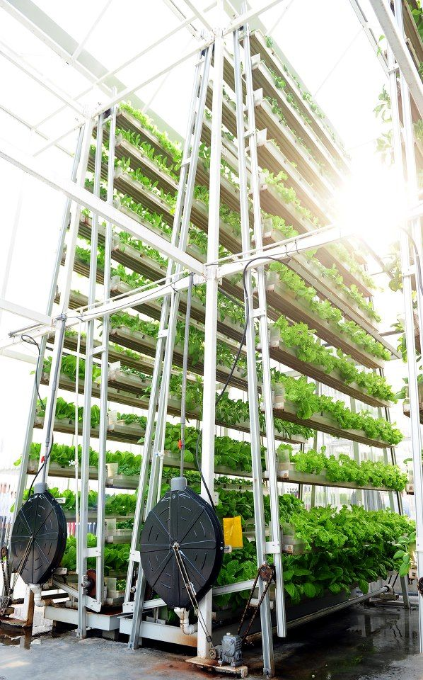 Sky-High Vegetables: Vertical Farming Sprouts In Singapore