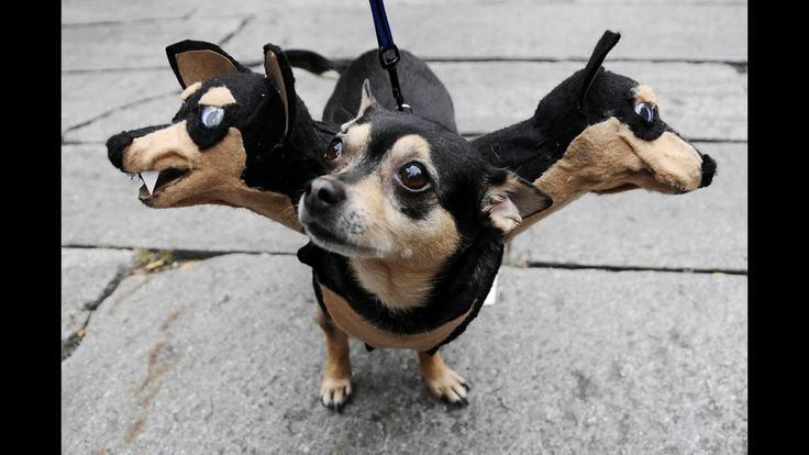 Funny Pets In Halloween Costumes ★ Funny Animals In Halloween Costumes 1