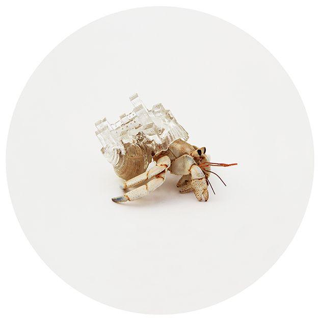 Aki Inomata kreiert im 3D-Druck architektonische Unterschlüpfe für Einsiedlerkrebse