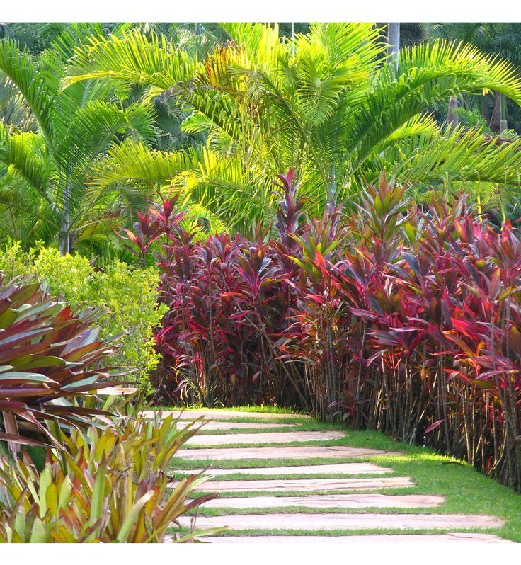 Tropical Backyard Ideas Australia: 470 Best Tropical Landscaping Ideas Images On Pinterest