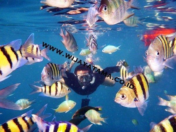 Paket Pulau Seribu, pulau ayer, pulau bidadari, pulau sepa, pulau putri, pulau pantara, pulau pramuka, pulau tidung, pulau kotok, pulau macan, pulau pelangi. wijayatama.co.id