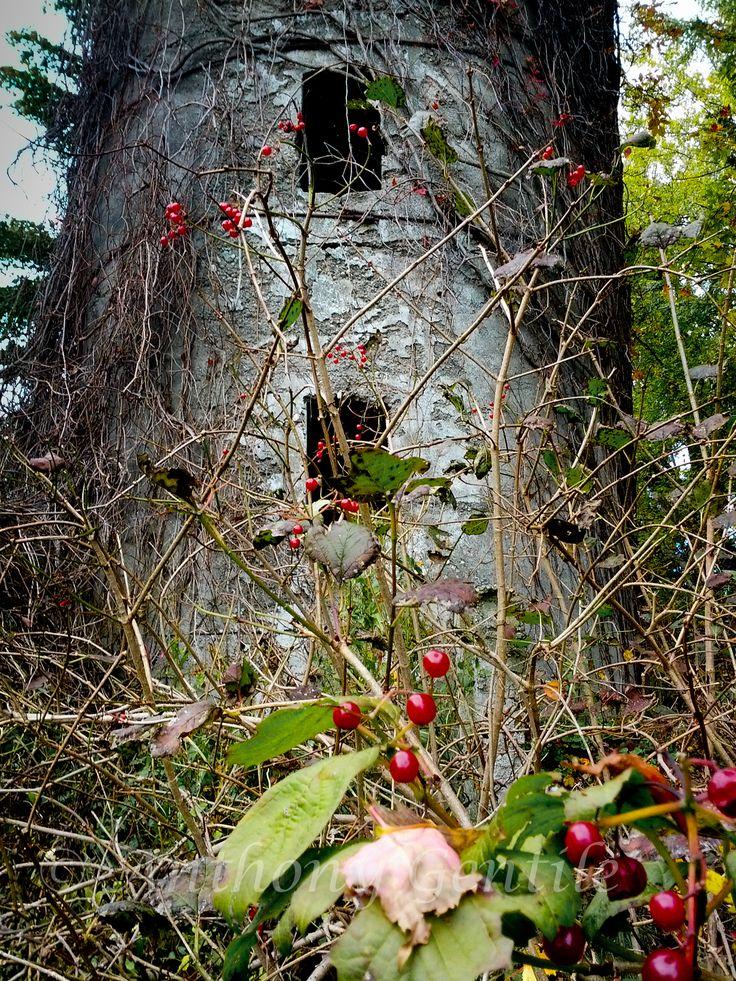 Silo  #silo #berry #maple leaf #autumn #anthonygentilephotography