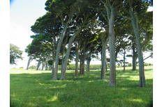 Waiuku 6 hectares bare