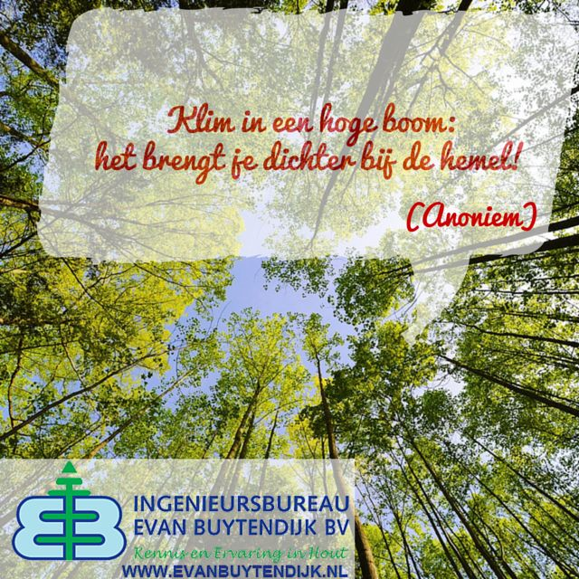 Citaten Over Hout : Best citaten uitspraken en aforismen over hout bomen