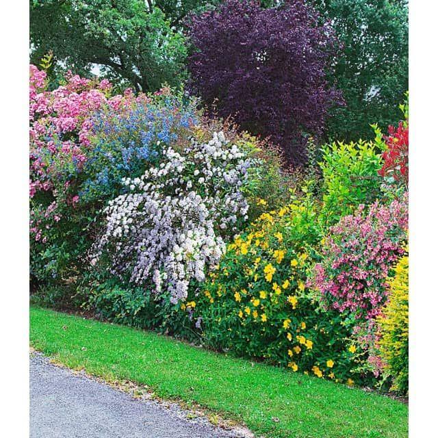 Simple Die Sommer Hecken Kollektion bietet einen dekorativ bl henden Sichtschutz f r Ihren Garten Bl tenreiche u pflegeleichte Heckenpflanzen