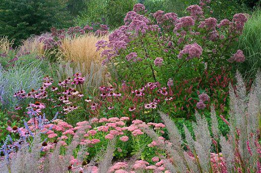 eupatorium, echinacea, sedum, calamagrostis, perovskia,