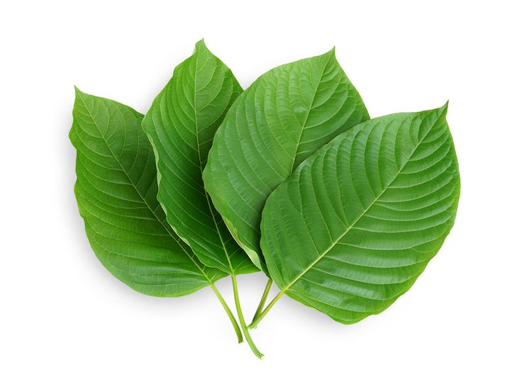 Kratom is one of these plants that some, including the DEA (Drug Enforcement Administration), are looking to make illegal in the United States and add it to the well-known list of drugs to avoid.