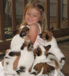 A whole litter of Papillons...oh, my!Exponentially sweet.