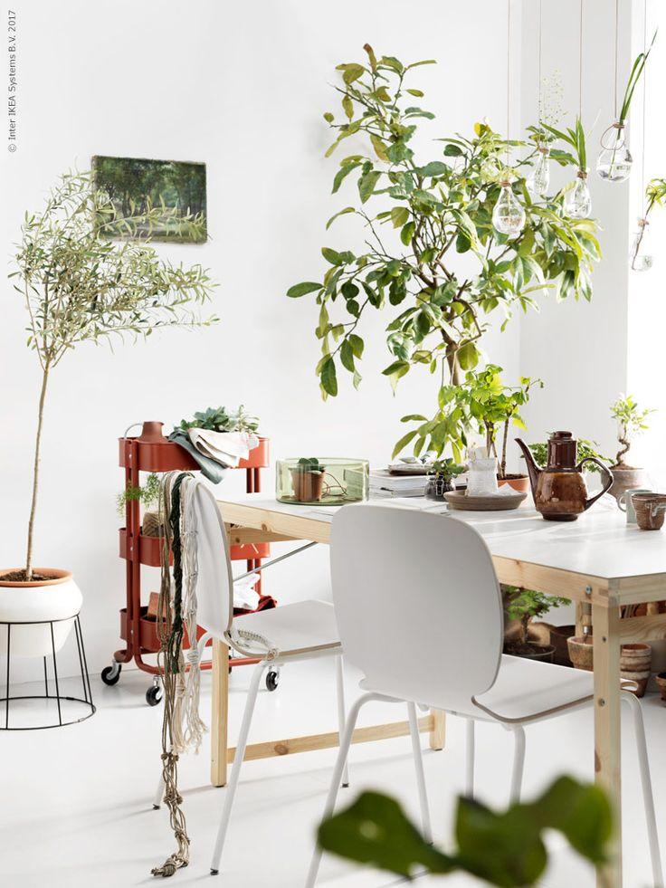 Ett rum för växter, men också ett personligt rum att växa med. SVENBERTIL sittskal, BRORINGE underrede, GÖRAN fällbord i furu/vitt, IKEA PS 2017 självbevattningskruka, RÅSKOG rullvagn i rödbrunt passar fint till alla växtgröna toner, CYLINDER vas/skål.