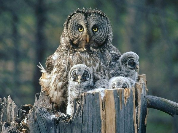 Best Corujas Images On Pinterest Google Search Search And - Meet the cuddly owl who loves landing on people
