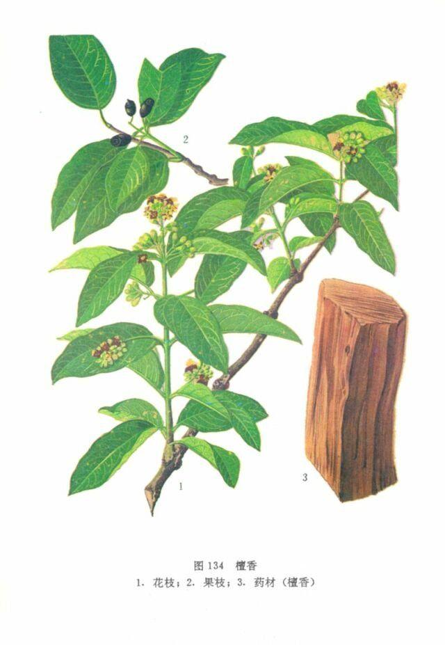 Aromatherapy:Santalum album (SANDELHOUT )