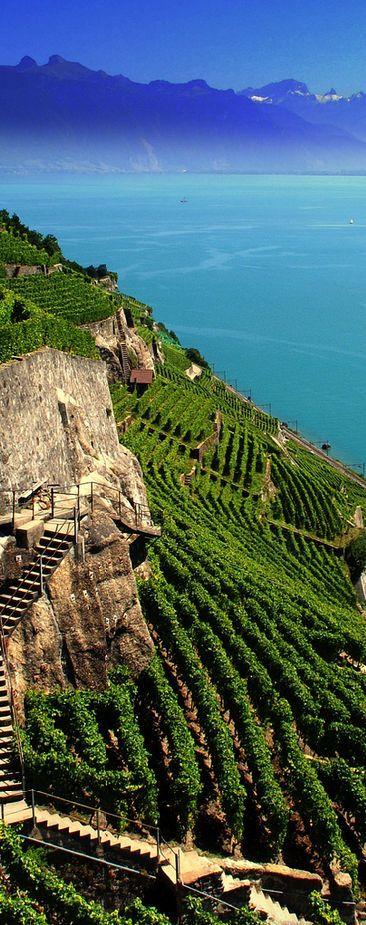 Viñedos, lago de Ginebra, Suiza