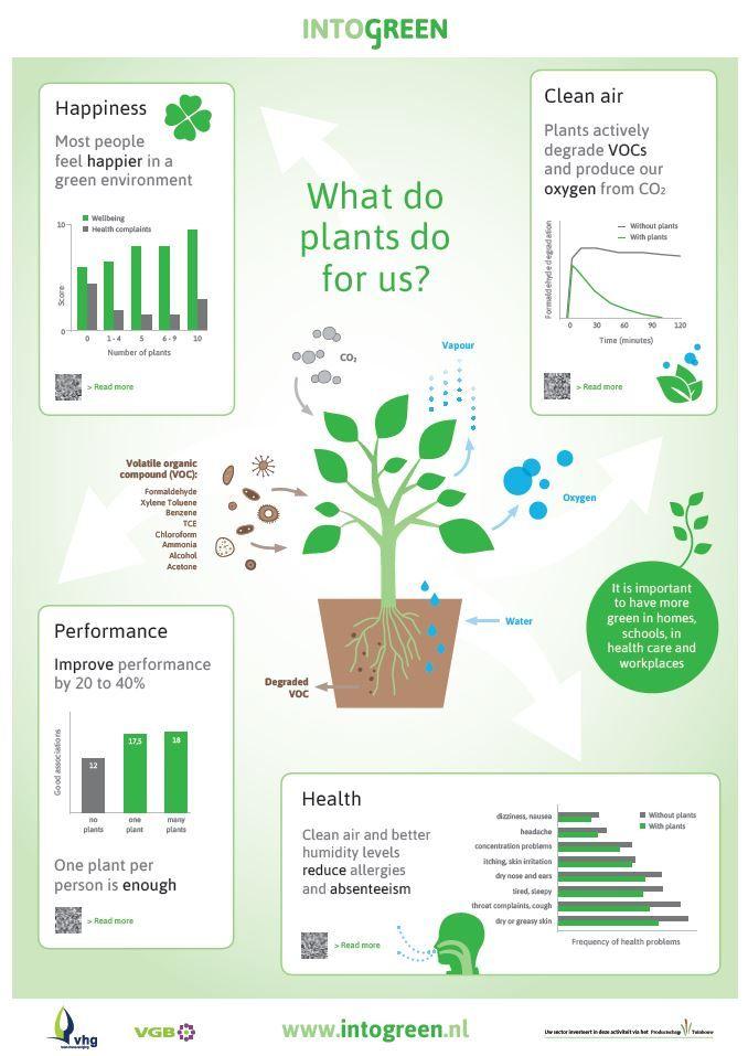 14 Best Health Benefits Of Plants Images On Pinterest