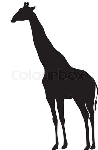 giraffe silhouette   Stock-Vektor von 'Silhouette von Giraffen'