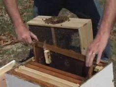 Beekeeping quickstart.