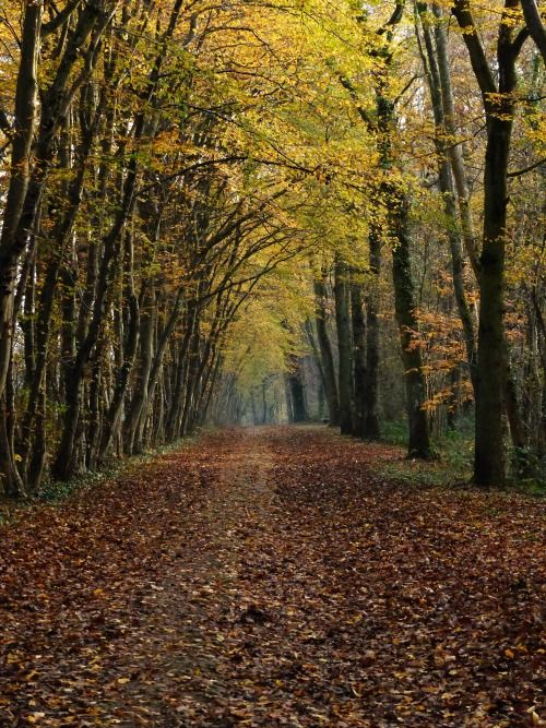 Royal Road, Forest of Chamarande | France (by Anna Poupon) Tumblr | Flickr | site